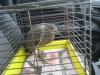 gekke vogel